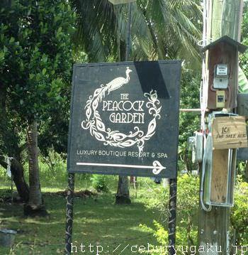 ボホール島ピーコックガーデンリゾート(the peacock garden resort hotel) 俺のセブ島留学