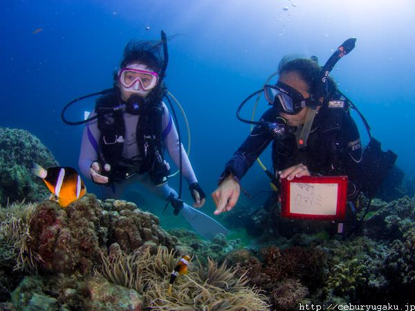 cebu diving takeya no4 04 1