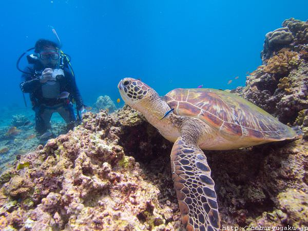 cebu diving takeya no4 05 1