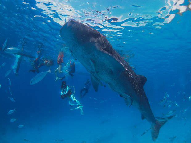 image-takeya-diving-cebu-2015-08-1