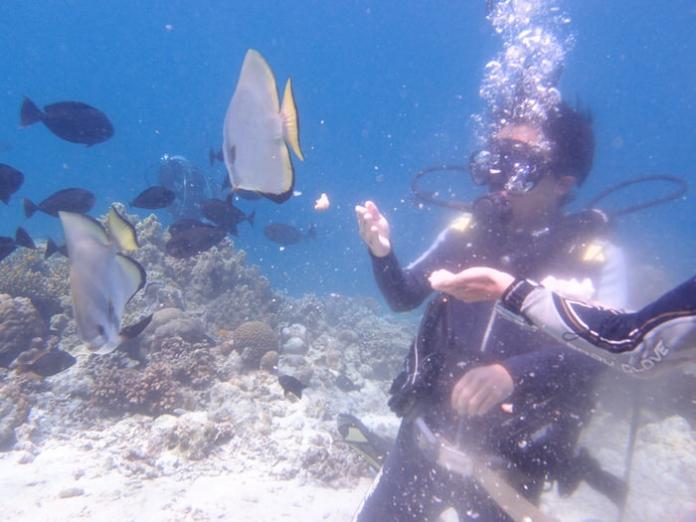 taiken diving11 1