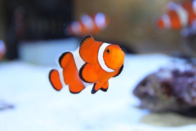 fish11 1