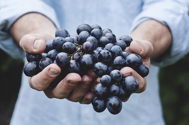 grapes 690230 640 1