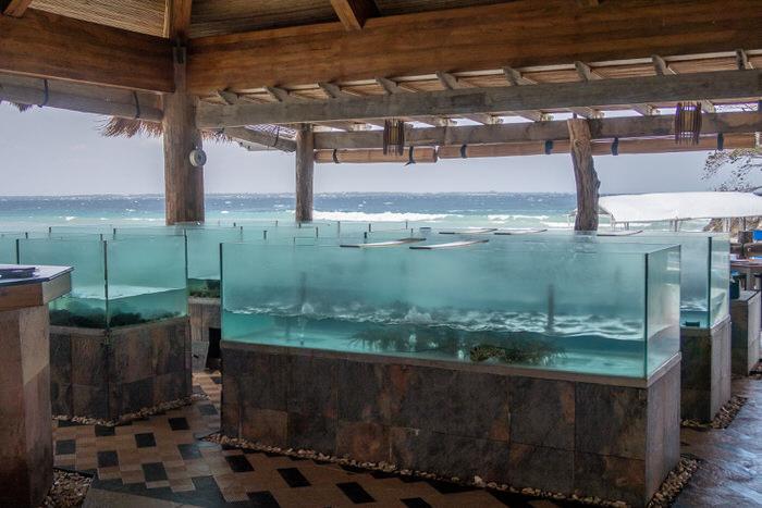 シーフードレストラン「The Cove」