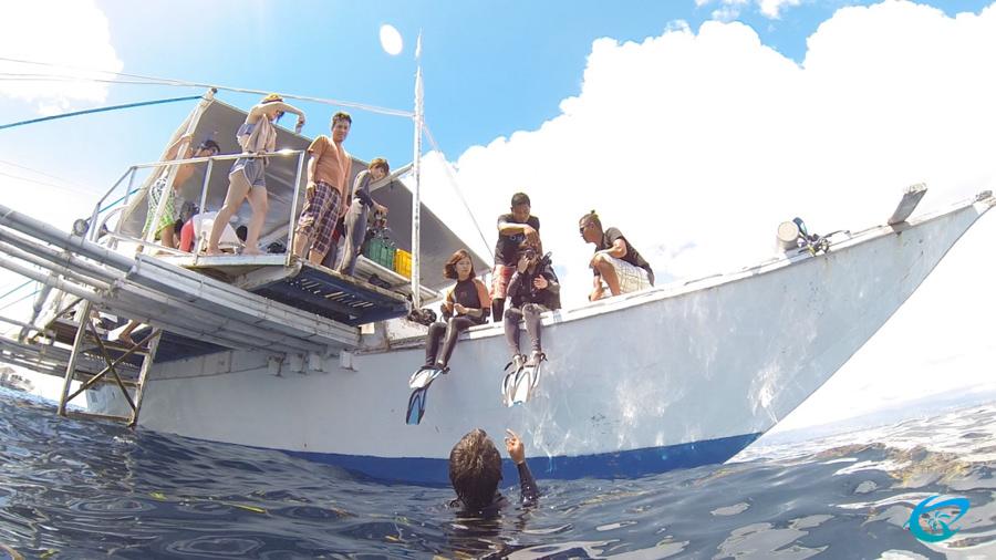diving cebu sonota 9